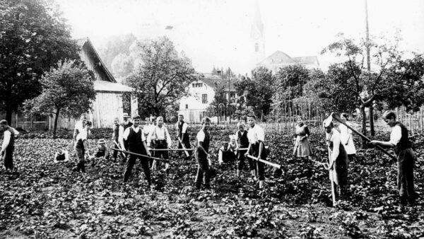 Anbauschlacht von 1914-1918 in Uster