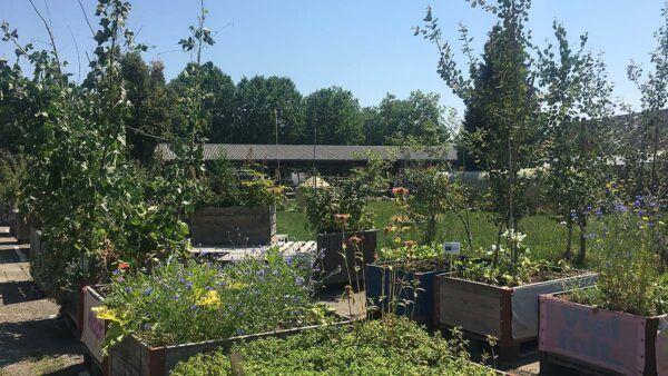 Urban Gardening – Uster blüht auf